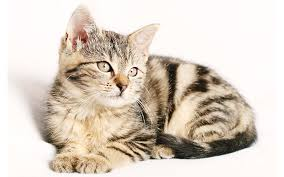 Cool Names For <b>Cats</b> - 300 Ideas For Cool <b>Cat</b> Names