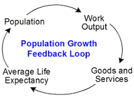 feedback loop   tool concept definitionmodel of population growth feedback loop