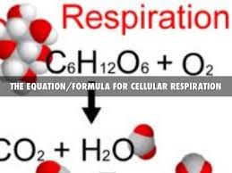 short essay on respiration and its mechanism