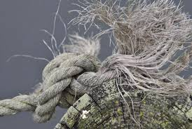 Image result for pics of a knot on a log