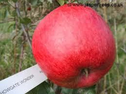 Apple Trees Howgate Wonder