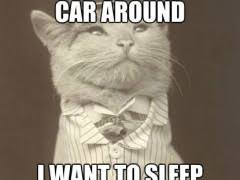 Rich Cat Meme | WeKnowMemes via Relatably.com