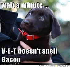 V-E-T doesn't spell bacon... - Meme Generator Funny | Awesomeness ... via Relatably.com