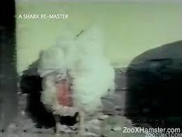 zoo-film-porn- Videos / Page 5 / ZooXhamster.com