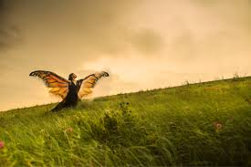 moving for monarchs the awakening project ecological reflections after metamorphosis gwynedd vetter drusch director and dancer on the konza