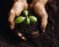 Image result for jesus master gardener
