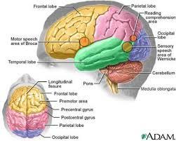 Psychology     Case Study Presentation