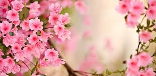 Приложения в Google Play – <b>Весенние цветы</b> Живые Обои