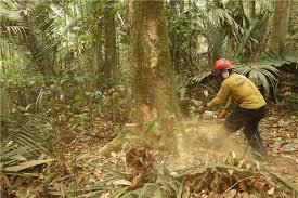Devastating human impact on the Amazon rainforest revealed  Logging