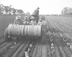 remember when volume burlington history the richter frey kraut co planted row after row of cabbage on the john r wilson farm west of burlington in 1950 setting out about 9 000 plants to
