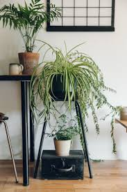 room plants x:  ideas about living room plants on pinterest bedroom plants shelf ideas and botanical kitchen