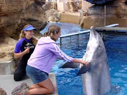 teenager job shadows professionals and gets multiple job offers sondra participating in a job shadow at seaworld photo of 17 year old sondra clark at seaworld