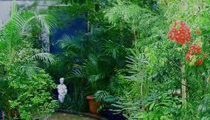 plants galore brisbane office plants