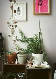 roomindoor plants decoration room bedroom