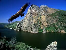 Resultado de imagen de parque nacional de monfrague