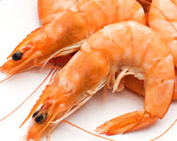 Resultado de imagen para cultivo crustaceos