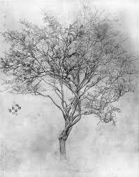 lemon tree x: lord frederick leighton   study of a lemon tree pencil on paper a