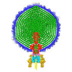 bacteriophage p22