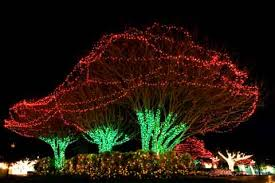 1000 Images About Outdoor Christmas Lights On Pinterest  Trees Christmas And Decorations  U
