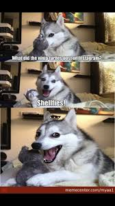 Pun husky!!!!!! on Pinterest | Pun Dog, Husky Meme and Puns via Relatably.com
