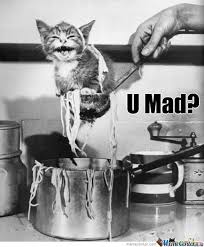 You Mad Cat Memes. Best Collection of Funny You Mad Cat Pictures via Relatably.com