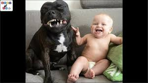 <b>Cute dog</b> - The dog's reaction to the baby for the first time is super fun