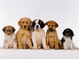 Hasil gambar untuk anjing