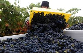 Image result for napa valley harvest image