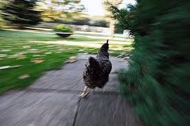 15 Situations That Will Have You Running Like A Chicken via Relatably.com