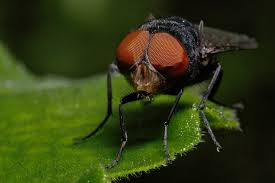 descriptive essay sample lord of the flies descriptive essay samplethe lord of the flies