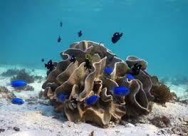 <b>Coral Reef</b> Project