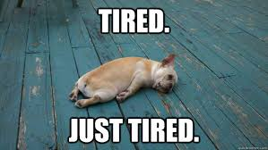 tired-frenchie.jpg via Relatably.com