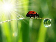 Image result for miracles of nature