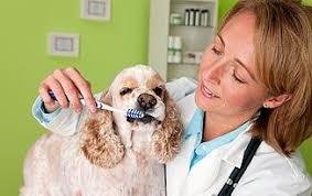 Dental Care for <b>Dogs</b>: Tips and Tricks | Healthy <b>Pets</b> | <b>Animal</b> Planet