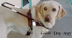 Image result for guide dogs