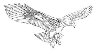 Resultado de imagem para desenho de aguia
