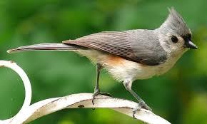 The Two Best Bird Feeder Poles - <b>Squirrel</b> Proof, Sturdy, & Stylish ...