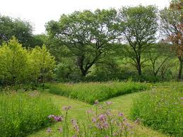 Small Picture Garden design by Cornwall designer based in Falmouth Wildflower