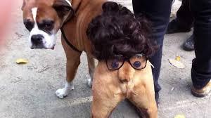 """Résultat de recherche d'images pour """"déguisement pour animaux"""""""