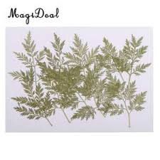 Online Shop for Popular frame herbarium from Artificial & <b>Dried</b> ...