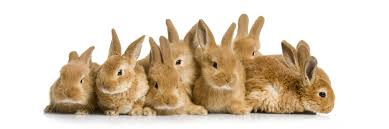 Image result for rabbits picture