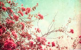 screen background image handy living: floral vintage wallpaper background eeebccede floral vintage wallpaper background