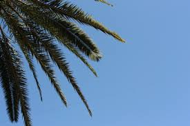 What Are <b>Palm Tree Fronds</b>? | Hunker