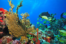 Image result for non copyrighted pictures of Isla Mujeres