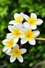 Image result for natural beauty of hawaii flower