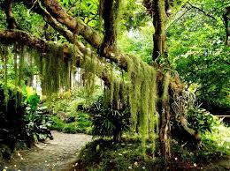 Resultado de imagem para fotos de florestas