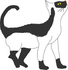 「neko」の画像検索結果