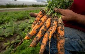 Dirt Poor: Have <b>Fruits and Vegetables</b> Become Less Nutritious ...