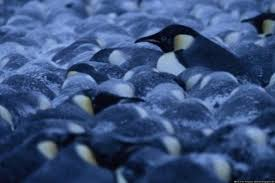 of the penguins by mitchell thompson on prezi