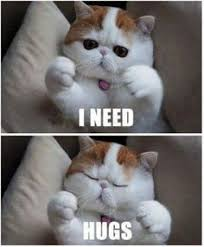Chats on Pinterest | Cat, Kitty and Funny Cats via Relatably.com